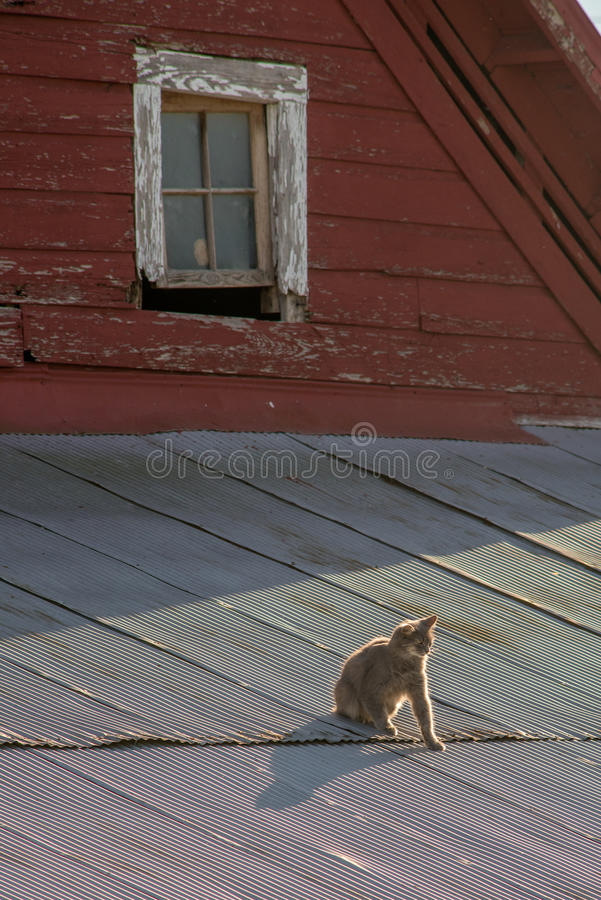 Download Cat on a Hot Tin Roof stock image. Image of cats, corrugated - 88940937