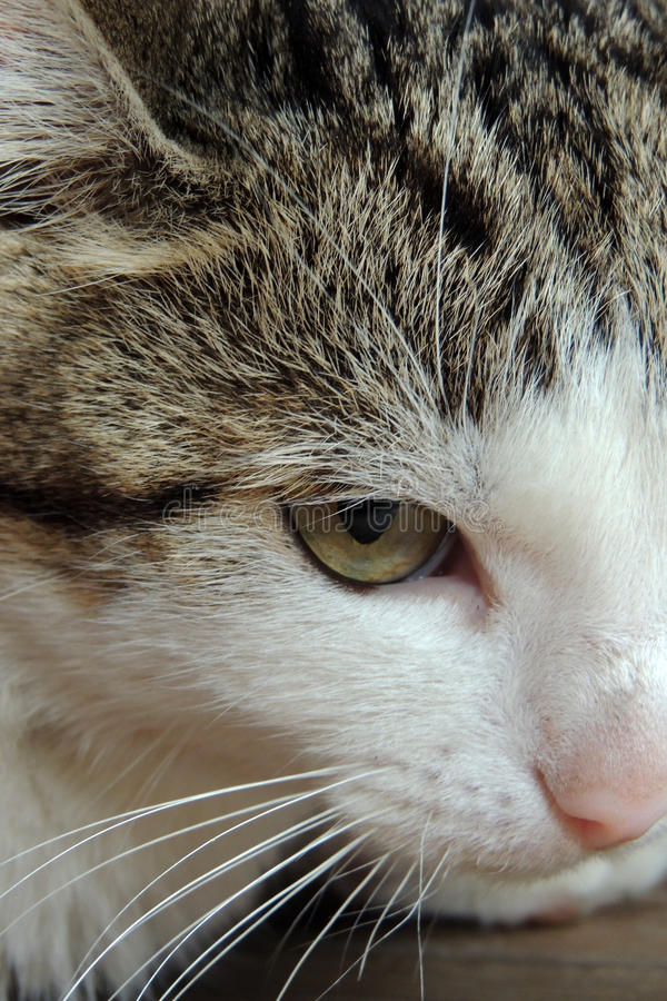Cat. Household pet, close up . Background stock image