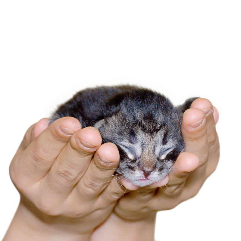 Cat in human hand. Small cat in human hand royalty free stock photos
