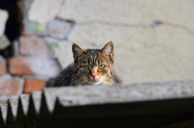 Cat in a hunt, lurking from a roof stock images