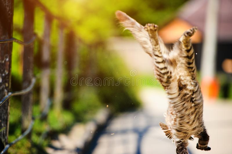 Cat hunted a sparrow in the air jump royalty free stock images