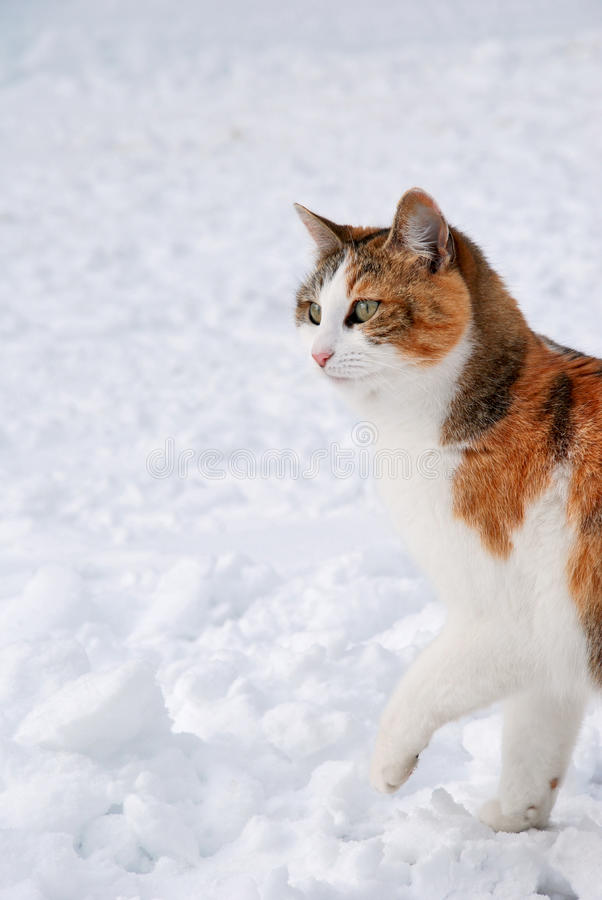 Cat Hunting Royalty Free Stock Photo