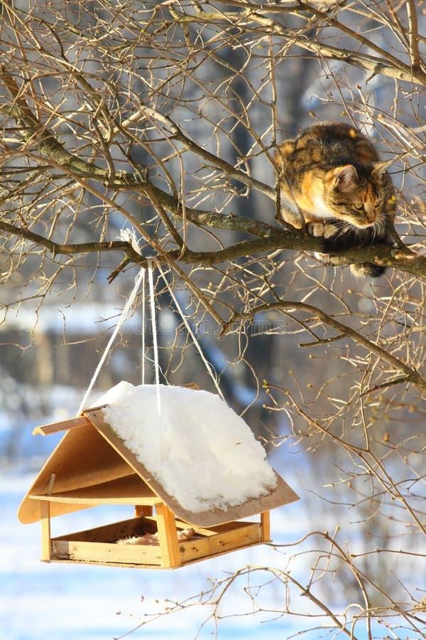Cat Hunting lizenzfreies stockbild