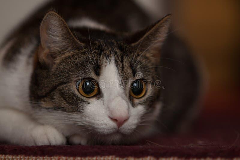 Cat Hunting foto de stock royalty free