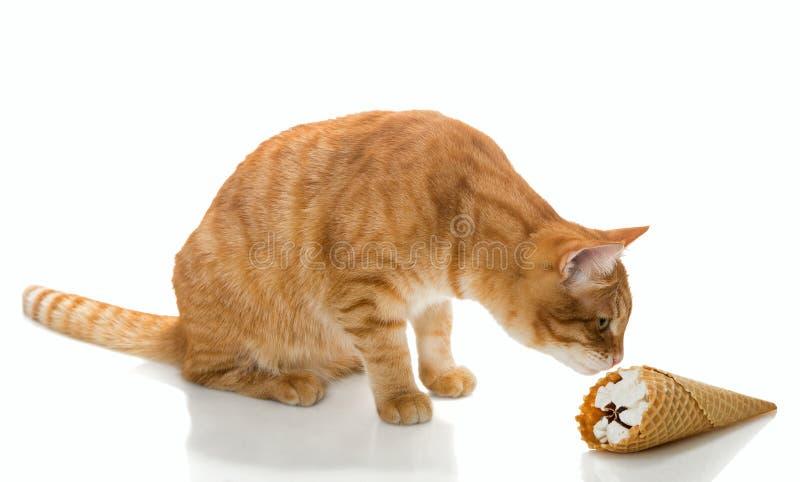 Cat and ice cream stock image