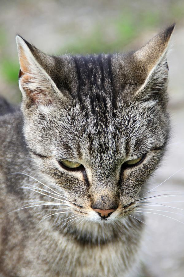 Cat. Image of a cat looking at you stock photos
