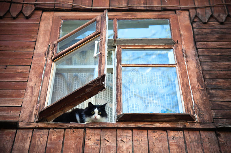 Cat inside of the window. In old wooden house stock images