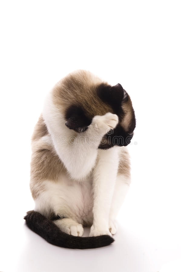 Cat isolated over white background stock images