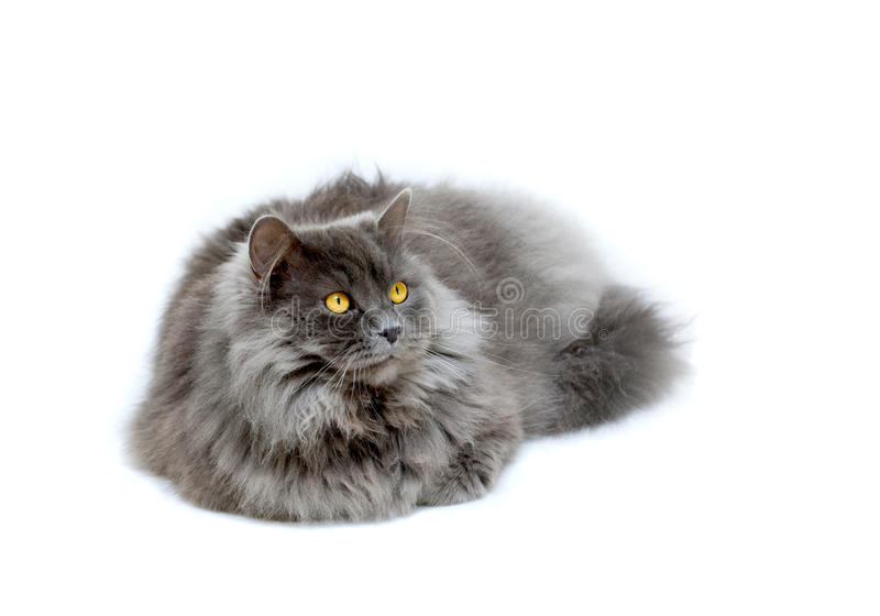 Download Cat isolatet stock photo. Image of furry, smart, cute - 28099164