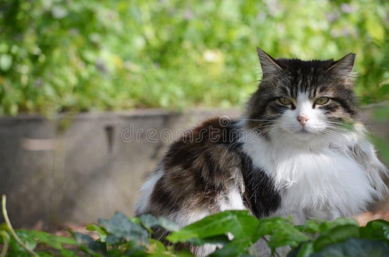 Cat, Istanbul, Turkey royalty free stock photography