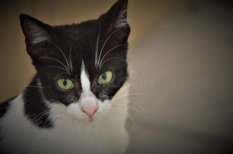 Cat. Its eyes are beautiful cat are poser in any way royalty free stock photography