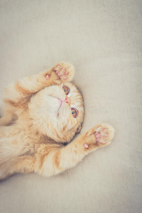 Cat with its paws up stock photo