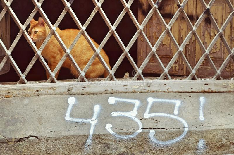 Cat in jail stock image