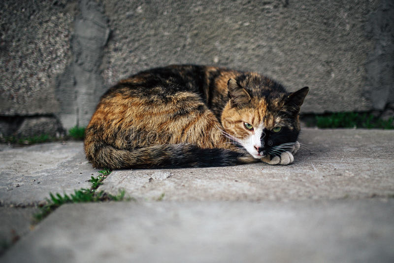 Cat. Just a cat on a street stock photo