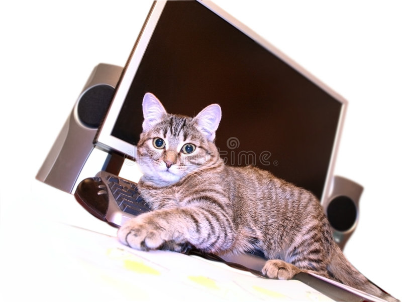 Cat on the keyboard royalty free stock photography