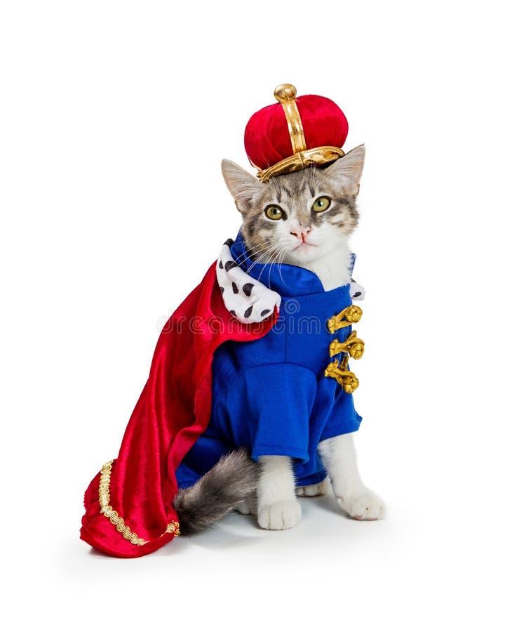 Cat In King Halloween Costume fotografering för bildbyråer
