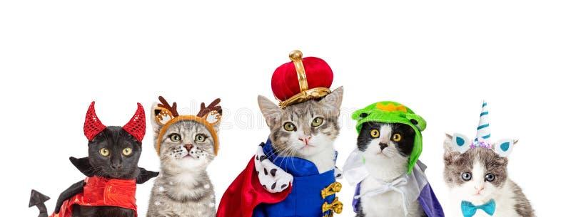 Cat In King Halloween Costume photo libre de droits