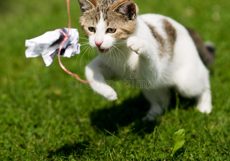 Download Cat / kitten stock photo. Image of cord, young, simmered - 13611192