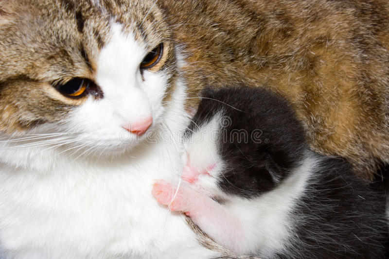 Cat and kitten. stock images