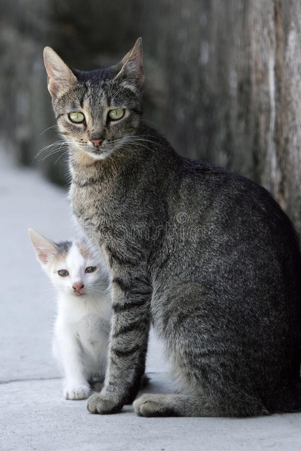 Download Cat And Kitten Stock Photography - Image: 21077592
