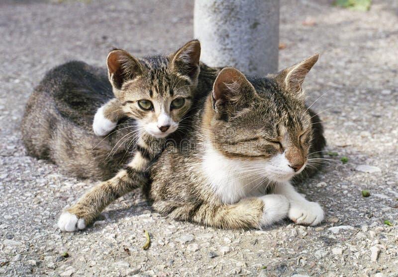 Cat and kitten. Sleep stock photos