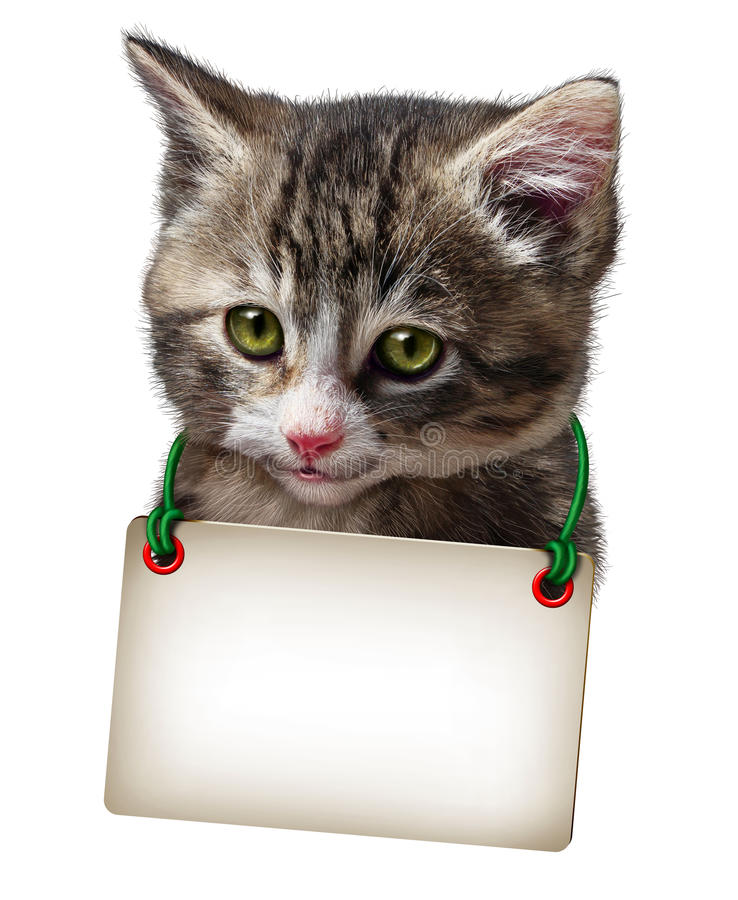 Download Cat Kitten Blank Card stock illustration. Image of card - 43583727