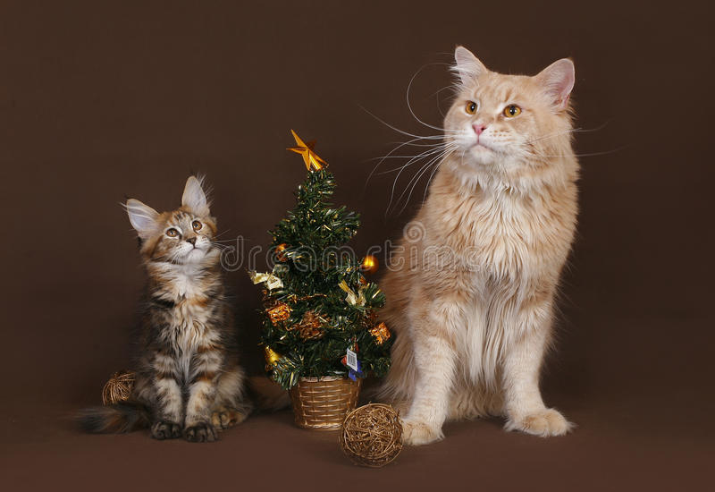 Cat and kitten with a Christmas tree. Cat and kitten with a Christmas tree on a brown background royalty free stock image