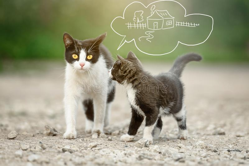 A cat with a kitten dreaming of finding a home royalty free stock image