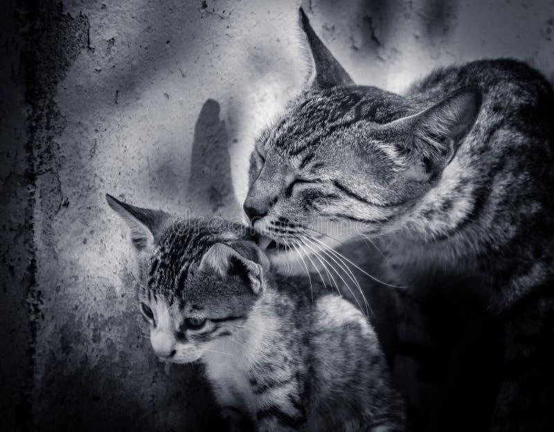 Cat and kitten stock image