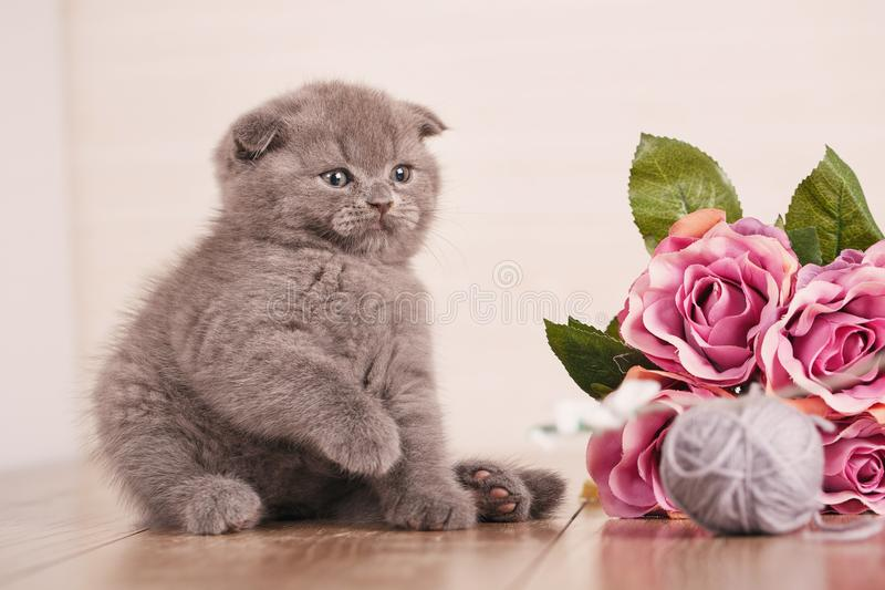 Cat. A Kitten Is Playing. Game With Flowers. Stock Photo - Image of ...