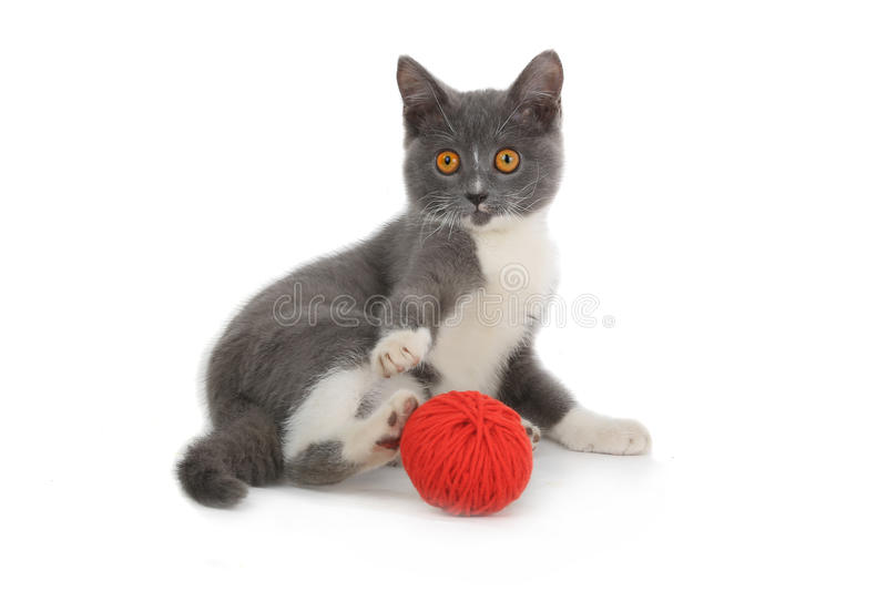 Cat. Kitten with red yarn hank isolated on white background stock photo