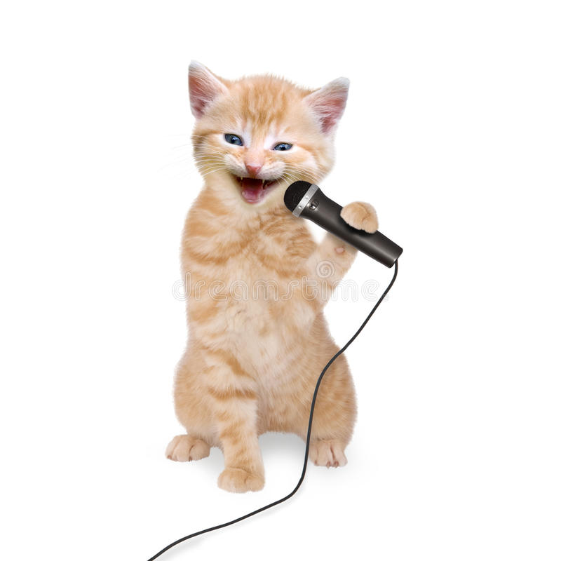 Cat kitten singing into microphone. On white background royalty free stock photography