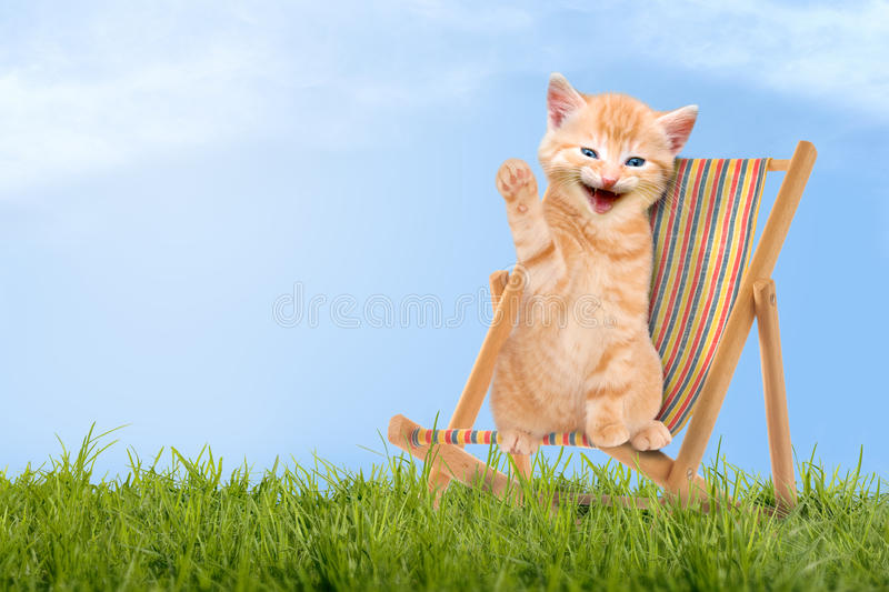 Cat / kitten sitting in deck chair / Sunlounger. Cat / kitten sitting in deck chair stock photos