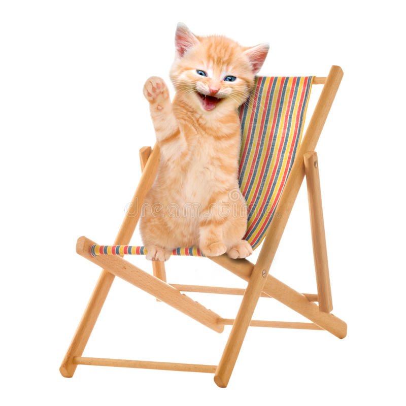 Cat / kitten sitting in deck chair / Sunlounger. Isolatet on white Background stock image