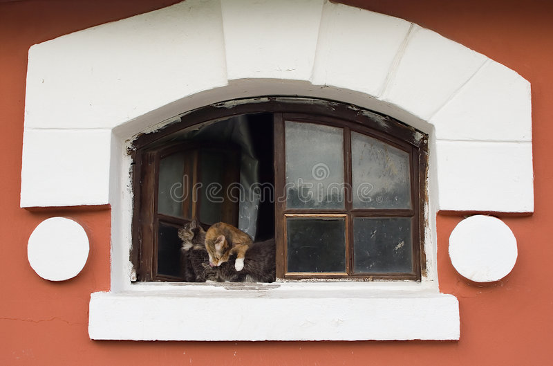 Cat with kittens. In window of age-old house stock photography