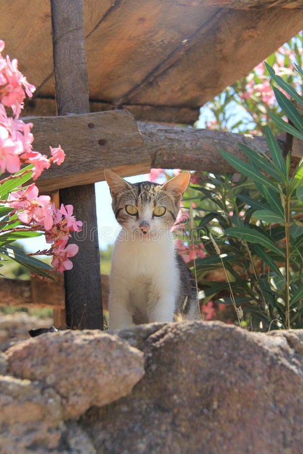Cat kitty, Aegean villages royalty free stock images