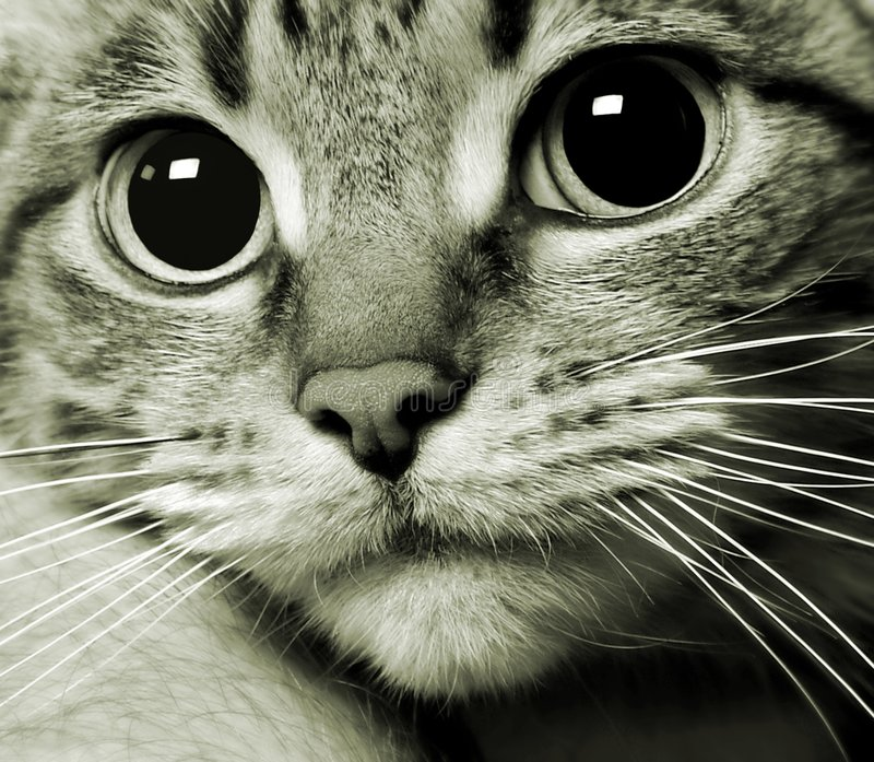 Download Cat kitty kitten portrait stock image. Image of cute, charming - 5170975