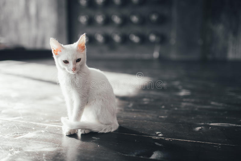 Cat kitty little soft white background inside stock images
