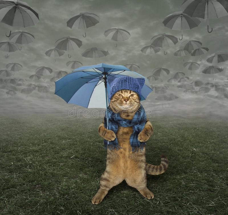 Cat in knitted hat with umbrella royalty free stock image