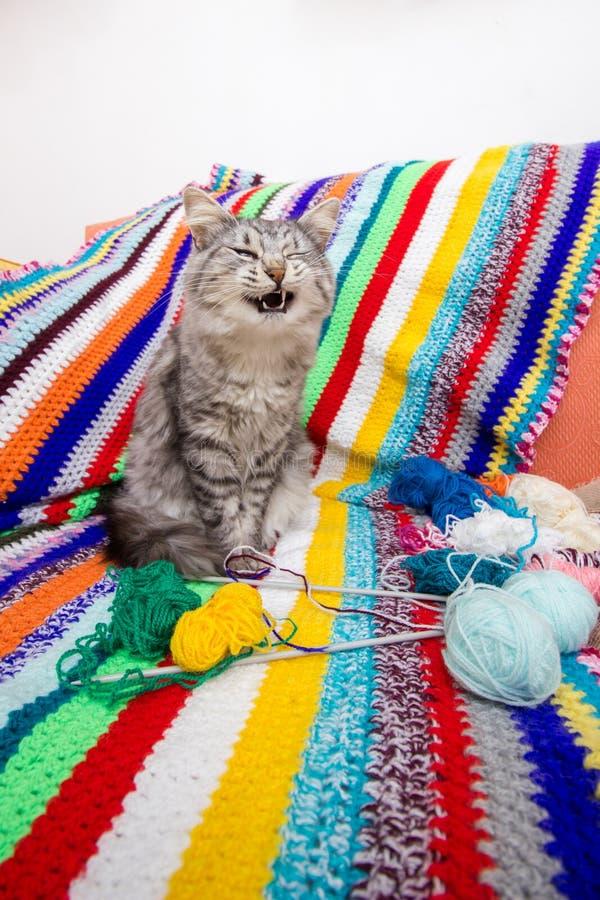 Cat knitting wool yarn. Cat sofa colorful knitting yarn rainbow colors royalty free stock images