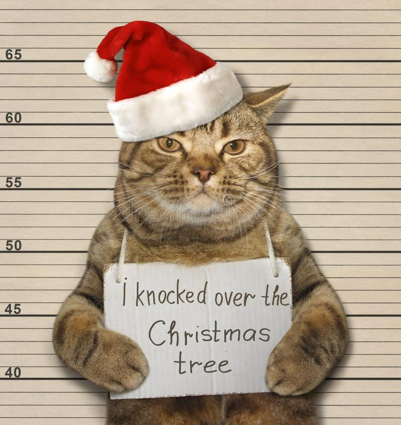 Bad cat and Christmas tree royalty free stock image