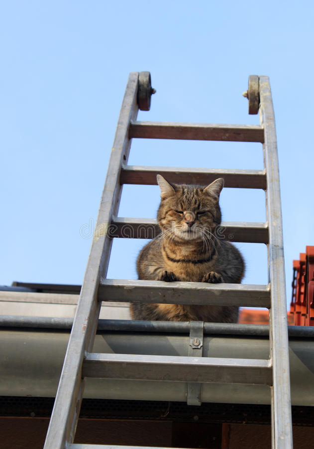 Cat on a ladder stock photos
