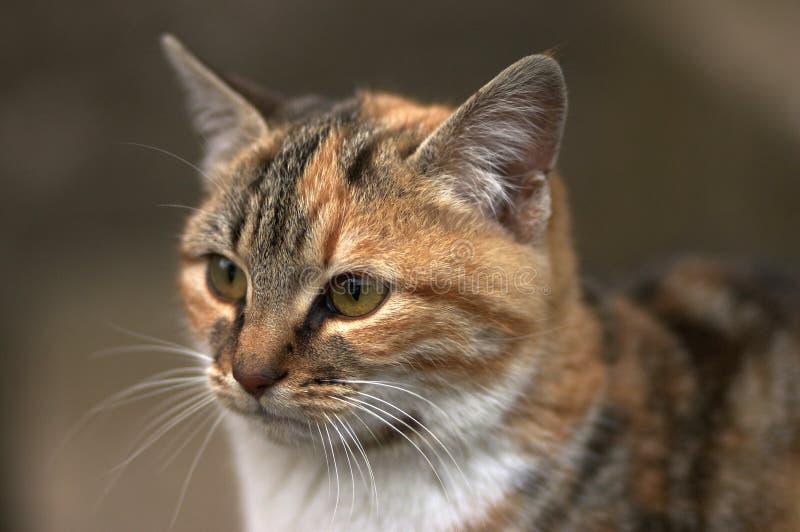 Cat landscape portrait stock photos