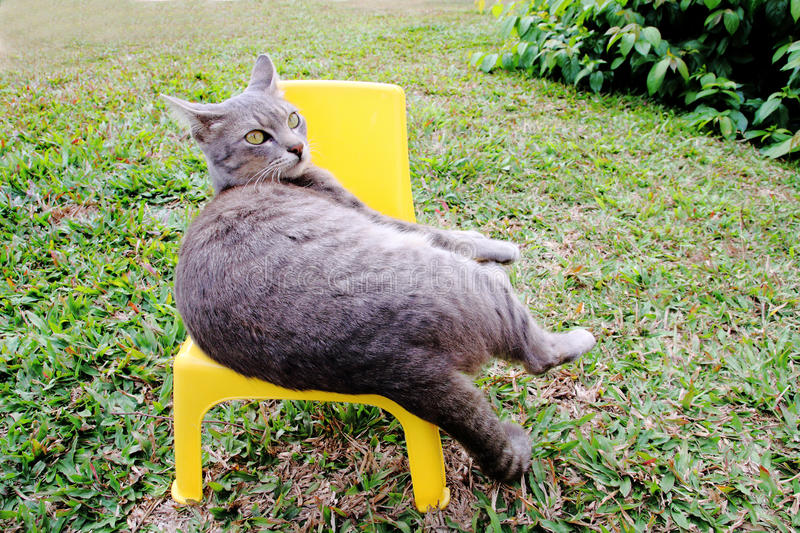 Cat lay on small chair stock photo