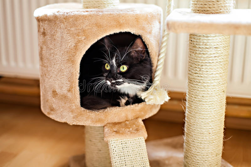 Cat laying in box on the scratching post stock photos