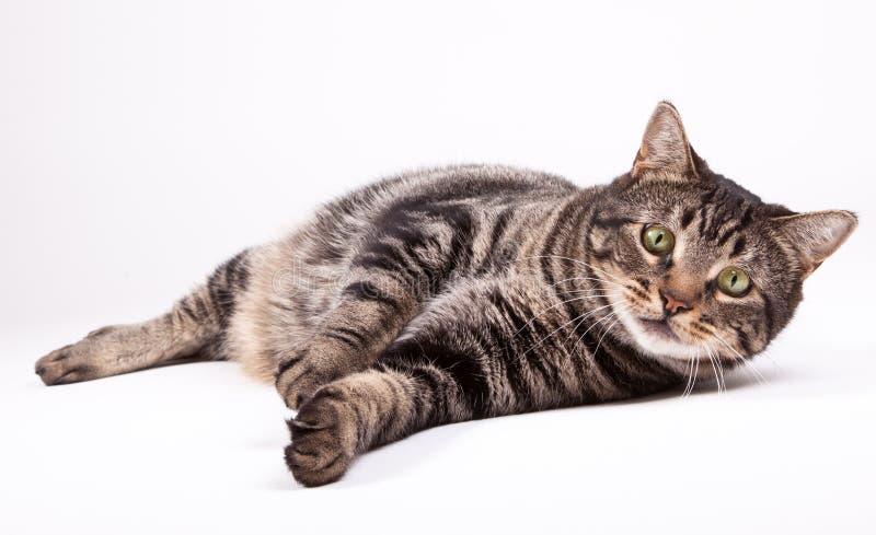 Cat laying down stock photos