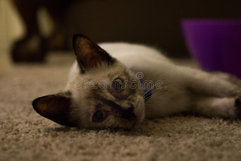Cat laying down stock images
