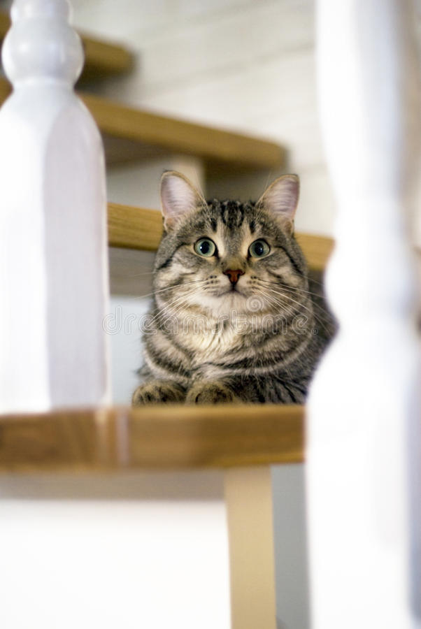 Cat Is Laying Down On The Stairway Stock Image