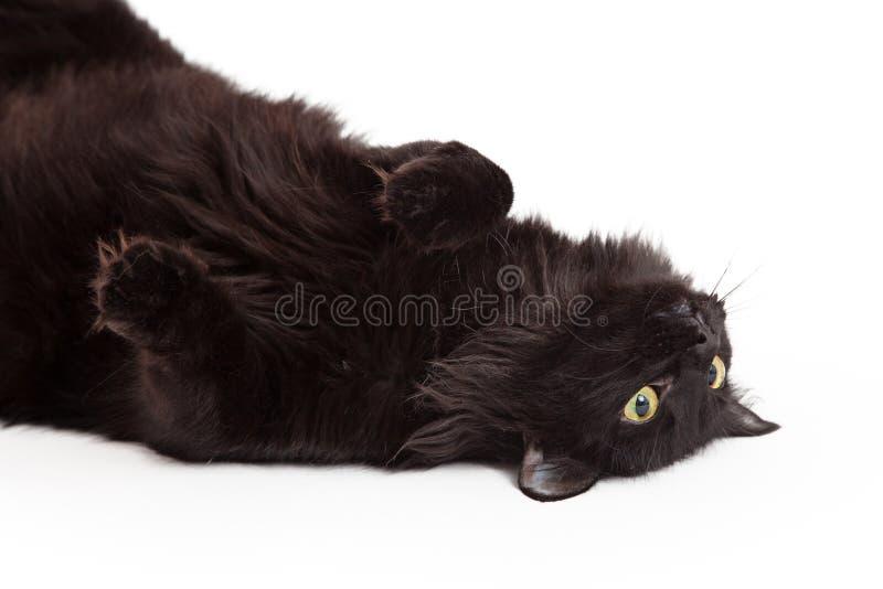 Cat Laying On Its Back negra linda que mira para arriba imagenes de archivo