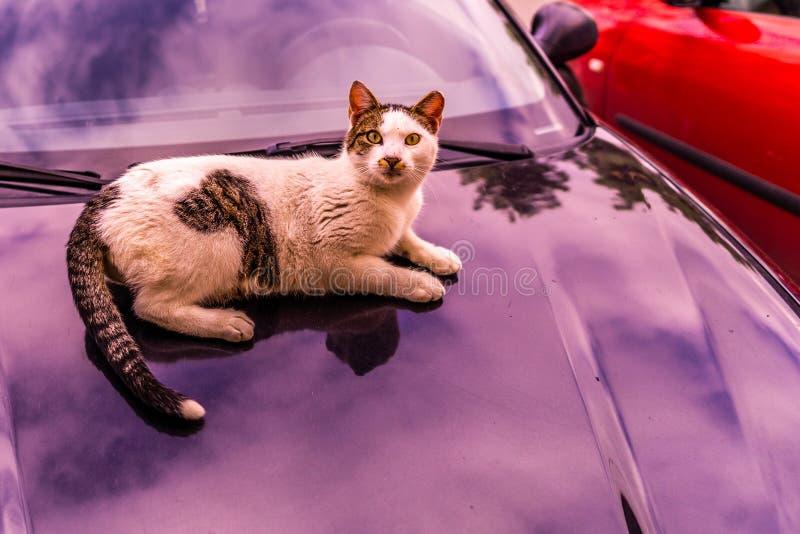 Cat Laying op een Auto 02 royalty-vrije stock fotografie